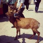 宮島観光を遊び尽くすための準備とおすすめグルメ&スポットまとめ