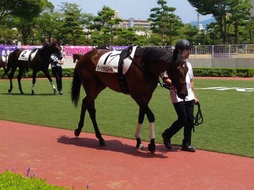 「一口馬主として愛馬のデビュー戦を全力で応援してきた【競馬】」のアイキャッチ画像